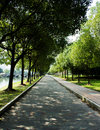 The boulevard walk on mood is very comfortable Royalty Free Stock Photo