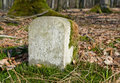 Boundary marker forest detail with in sunny ambiance Stock Photography