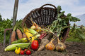 Bountiful harvest Royalty Free Stock Photos