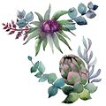 Bouqet succulent floral botanical flowers. Watercolor background set. Isolated succulents illustration element.