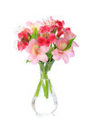 Bouquet of Alstroemeria flowers. Royalty Free Stock Photo