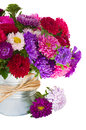 Bouquet of aster flowers in metal pot red and violet isolated on white background Stock Images