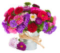 Bouquet of aster flowers in pot red and violet isolated on white background Stock Images