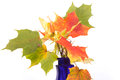 Bouquet of autumn leaves in bright colored vase on a white background Stock Images