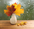 Bouquet of autumn leaves on window sill Stock Images