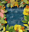Bouquet of autumn leaves on wooden background