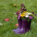 Bouquet of barberry, clover and wild flowers in rubber boots. Autumn appeal. Walking in the park Royalty Free Stock Photo