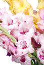 Bouquet of beautiful colorful gladioli big gladiolus on a white background Stock Photo