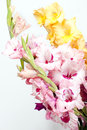 Bouquet of beautiful colorful gladioli big gladiolus on a white background Stock Image