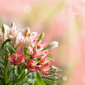 Bouquet of beautiful pink flowers with bokeh and copy space Stock Image