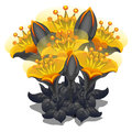 Bouquet of black and yellow flowers. Vector