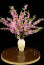 Bouquet of blooming wild cherry branches in a vase on a black background Royalty Free Stock Photo