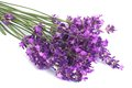 Bouquet of blue lavender flowers isolated on white Royalty Free Stock Photo