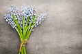 Bouquet of blue muscari on rustic gray background