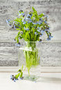 Bouquet of blue wild forget-me-not flowers Royalty Free Stock Photo