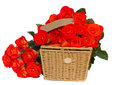 Bouquet of bright orange roses with basket isolated on white background Stock Photography