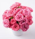 Bouquet of bright pink roses isolated fresh on a white background Royalty Free Stock Images