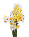 Bouquet of brightly colored daffodils Royalty Free Stock Photography