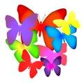 Bouquet of butterflies Stock Photo