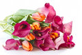 Bouquet of calla lilies and tulips Stock Image