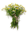 Bouquet of chamomile flowers Royalty Free Stock Photo