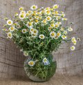 stock image of  A bouquet of chamomiles in a glass vase on the background of burlap