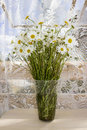 A bouquet of chamomiles in a transparent vase against the backdrop of lace curtains. Summer rest.