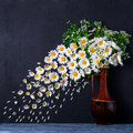 A bouquet of chamomiles in a vase. The wind blows off the petals Royalty Free Stock Photo