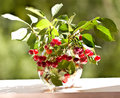 Bouquet of cherries in a glass vase Stock Image