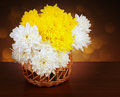 Bouquet of chrysanthemums in a wicker basket still life flowers Royalty Free Stock Images