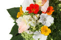 Bouquet of color summer flowers Royalty Free Stock Photography