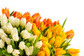 Bouquet of colorful tulip flowers spring freshness Royalty Free Stock Photos