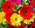 Bouquet of Colourful Gerbera Flowers Royalty Free Stock Images