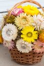 Bouquet of colourful  strawflowers in a wickery basket - autum decoration of golden everlasting on the table Royalty Free Stock Photo