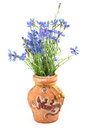 Bouquet of cornflowers in a clay vase Royalty Free Stock Photos