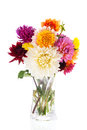 Bouquet dahlias in glass vase isolated over white background Stock Image