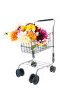 Bouquet dahlias in shopping cart isolated over white background Royalty Free Stock Image