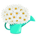 Bouquet of daisies in green garden watering can Royalty Free Stock Photo