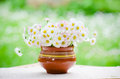 A bouquet of daisies in a pot at the table Stock Photo