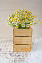 Bouquet of daisies on a vintage wooden surface Royalty Free Stock Photo