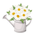 Bouquet of daisies in watering can. Vector. Royalty Free Stock Photo