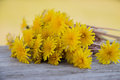 A bouquet of dandelions yellow flowers romantic feelings emotions first love Stock Photos