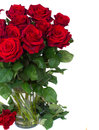 Bouquet of dark red roses in vase isolated on white background Stock Image