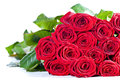 Bouquet des roses rouges sur le blanc Photos stock