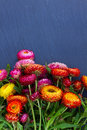 Bouquet of everlasting flowers on on black stone with copy space Royalty Free Stock Images