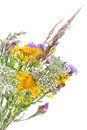 Bouquet of field flowers Royalty Free Stock Images