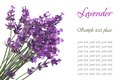A bouquet of flowers of lavender blue with text Royalty Free Stock Photo