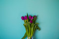 Bouquet of flowers tulips beautiful vibrant leaves of stems on a blue background Royalty Free Stock Photo