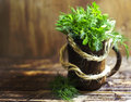 Bouquet of fragrant herbs of fennel and parsley, on a wooden background Royalty Free Stock Photo