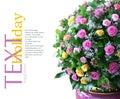 Z čerstvý kvety